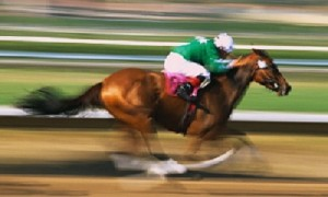 image racehorse